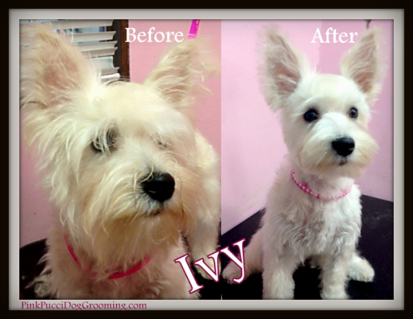 ivy before after