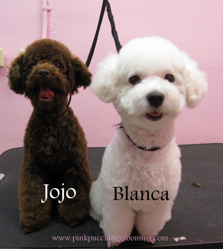 Pink Pucci Torrance Best Dog Grooming Shop Specializes In Japanese
