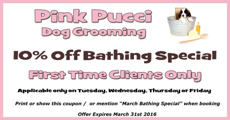 March Dog Bathing Discount Special